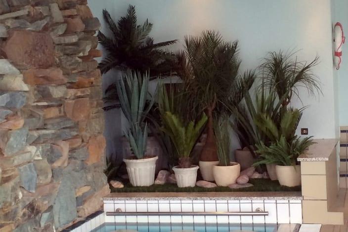 indoor plant rental