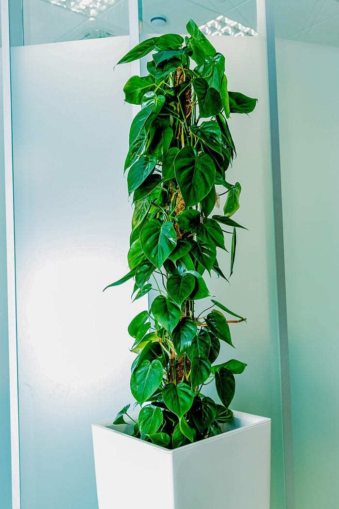 Live Office Plants