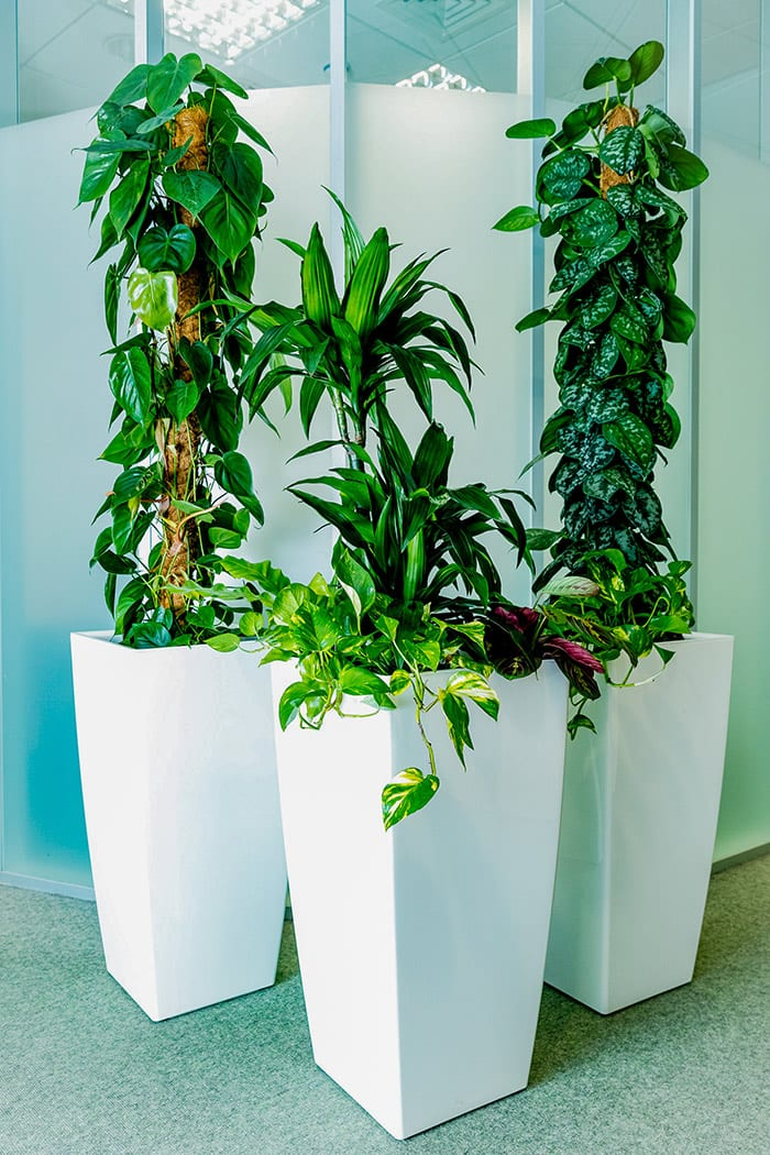 office plants rental